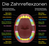 Teeth Reflexology Equivalent Organs German Royalty Free Stock Photography