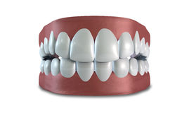 Teeth Set Closed Isolated Stock Photography