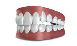 Teeth Set Closed Isolated. Seperated upper and lower sets of human teeth set in gums on an isolated background Stock Images