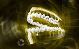 Teeth set Royalty Free Stock Photos