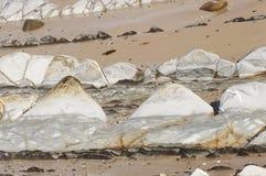 Teeth of shark, Tarifa beach, Cadiz spain stock photo