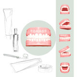 Teeth or tooth illustration, perspective views in mouth. 3D teeth or tooth illustration, perspective views in mouth vector illustration