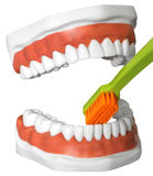 Teeth and toothbrush Royalty Free Stock Image
