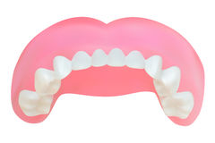 Teeth of the upper jaw. Vector illustration Royalty Free Stock Images