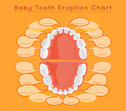 Teeth vector Infographic. Baby prelimanary tooth eruption chart. Vector illustration. Editable image on a light orange background.Children teeth infographic Stock Images