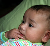 Teething baby. Image of a beautiful biracial baby teething and chewing his fingers Royalty Free Stock Image