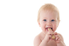 Teething baby chewing on rusk Royalty Free Stock Photos
