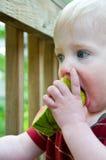 Teething baby chews on watermelon stock photo