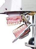Teeths artificiels de cru Images stock