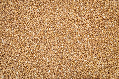 Teff grain background Royalty Free Stock Photography
