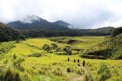 Tegal Panjang. Green Landscape in Tegal Panjang - Indonesia royalty free stock photo