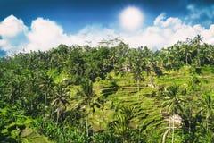 Tegalalang米大阳台鸟瞰图晴天在Ubud,巴厘岛,印度尼西亚 免版税库存图片