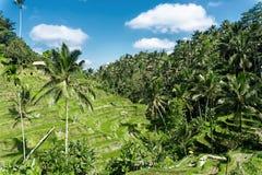Tegalalang米大阳台鸟瞰图晴天在Ubud,巴厘岛,印度尼西亚 免版税库存照片