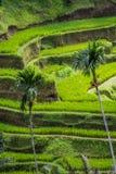 Tegalalang米大阳台, Gianyar,巴厘岛,印度尼西亚 图库摄影