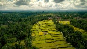 Tegalalang领域 图库摄影