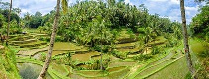Tegalalang-Reis-Terrassen, Bali 7 Stockfotografie