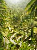 Tegalalang-Reisterrassen mit Wasser- und Palmen in Bali lizenzfreie stockfotos