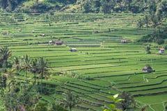Tegalalang rice terrace. Bali ubud Stock Photos