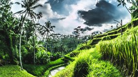 Tegalalang Rice Terraces Bali Timelapse 4k. Timelapse of some beautiful rice fields on Bali, Indonesia stock footage