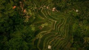 Tegalalang terrasse米 免版税图库摄影