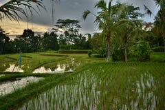Tegallalang è una valle con il migliore terrazzo del riso di Bali immagini stock