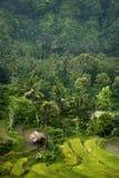 Tegallalang, Bali. Stock Images
