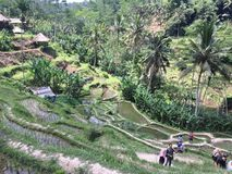 Tegallalang-Reis-Terrassen in Ubud Bali Stockbilder