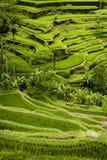Tegallalang, terrazzi del riso di Bali. Fotografie Stock Libere da Diritti