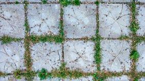 Tegelplattan i staden med litet stenar och gräs spirar mellan tegelplattorna Sommarstilväg på lekplatsen arkivbild