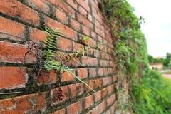 Tegelsten i den Dong Hoi citadellväggen, Quang Binh, Vietnam 3 Royaltyfria Foton