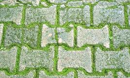 Tegelsten med mossagolvet Arkivfoto
