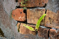 Tegelsten- och cementvägg med lav- och ormbunkeväxter som en backgroun Royaltyfri Bild