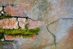 Tegelsten- och cementvägg med laven som en bakgrund Royaltyfri Fotografi