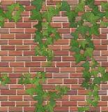 Tegelsten- och murgrönatextur Arkivfoton