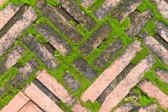 Tegelsten på jordning innehåller någon mossa Arkivbild