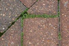 Tegelstenar med mossa in - between Fotografering för Bildbyråer