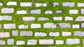 Tegelstenbana med mossa Bakgrund foto inget Fotografering för Bildbyråer