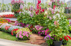 Tegelstengångbana i blommaträdgård arkivbild