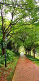 Tegelstengångbana- och lampstolpen i parkera är full av gröna träd efter regnet royaltyfria bilder