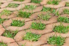 Tegelstengolv med gräs Royaltyfria Bilder