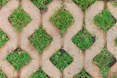 Tegelstengolv med gräs Arkivbilder