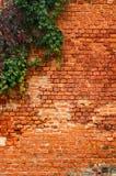 tegelstenmurgrönavägg Arkivfoton