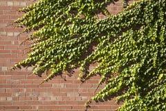 tegelstenmurgrönavägg royaltyfria bilder