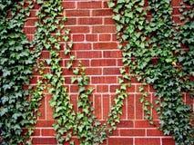 tegelstenmurgrönavägg Royaltyfri Fotografi