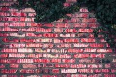 Tegelstenstaket med murgrönasidatextur fotografering för bildbyråer