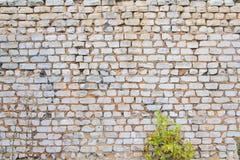 tegelstentegelstentäckning förstörde sidogammalt väggväder Grön buske Arkivfoto