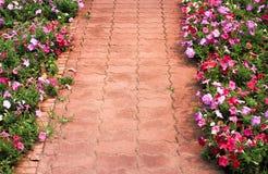 Tegelstentrottoarmodeller och f?rgrika petuniahybridablommor som blommar p? sidan, dekorativ bakgrund f?r natur arkivfoto