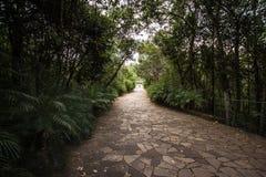 Tegelstenväg in i en skog i Brasilia, Brasilien royaltyfri foto