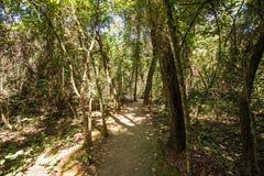 Tegelstenväg in i en skog i Brasilia, Brasilien royaltyfri bild