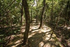 Tegelstenväg in i en skog i Brasilia, Brasilien royaltyfria foton